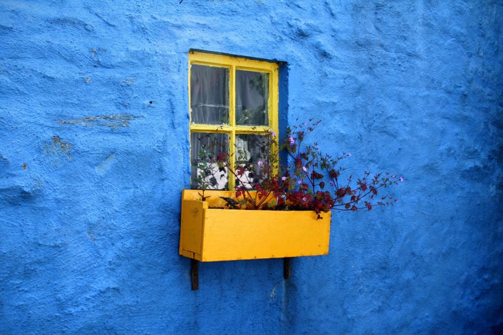 Yellow windowbox with burgundy flowers in it, mounted against a blue wall