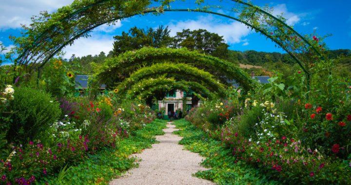 Green lush garden
