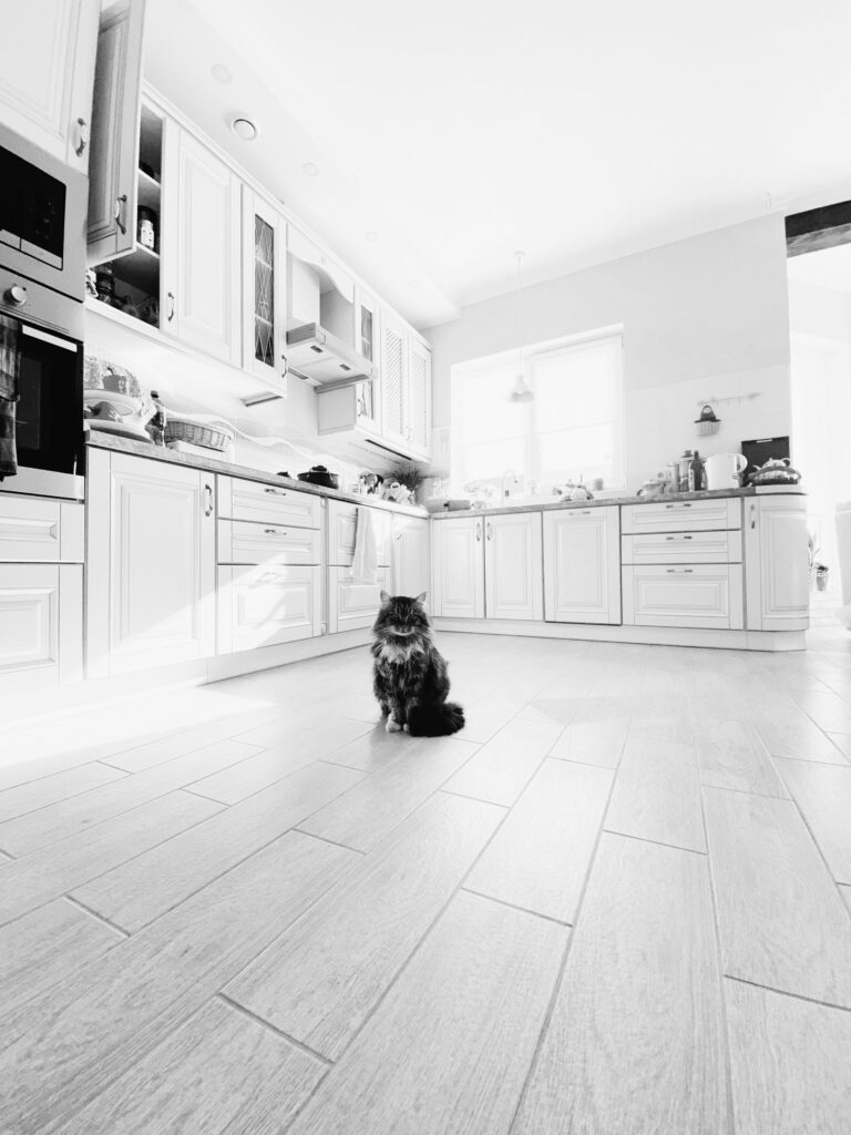 A black and white photo of a cat sitting on the floor of a kitchen