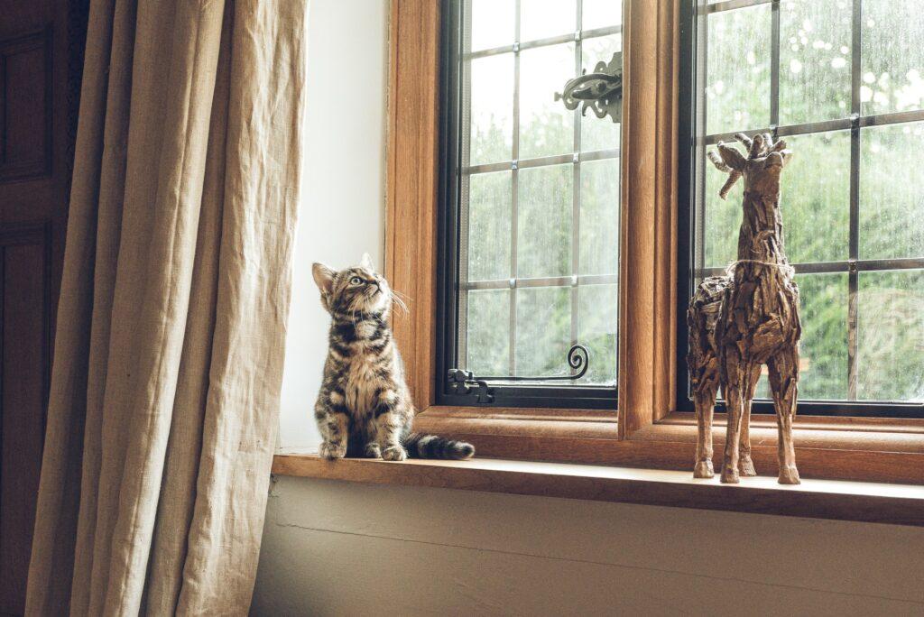 A cute kitten sitting on a windowsill, looking out the window